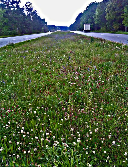 Roadside Flowers Awendaw with Watermark 25 April 2013