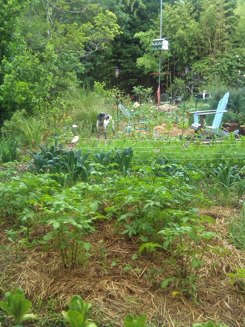 My chaotic garden 5 May 2013