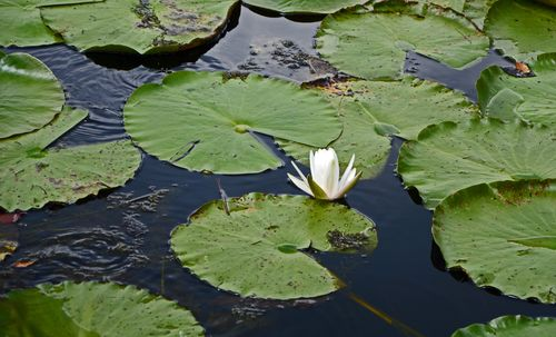 Token Lily Pad on the Crinum Road Trip Photo