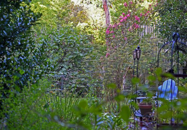 Side Garden 9 August 2013