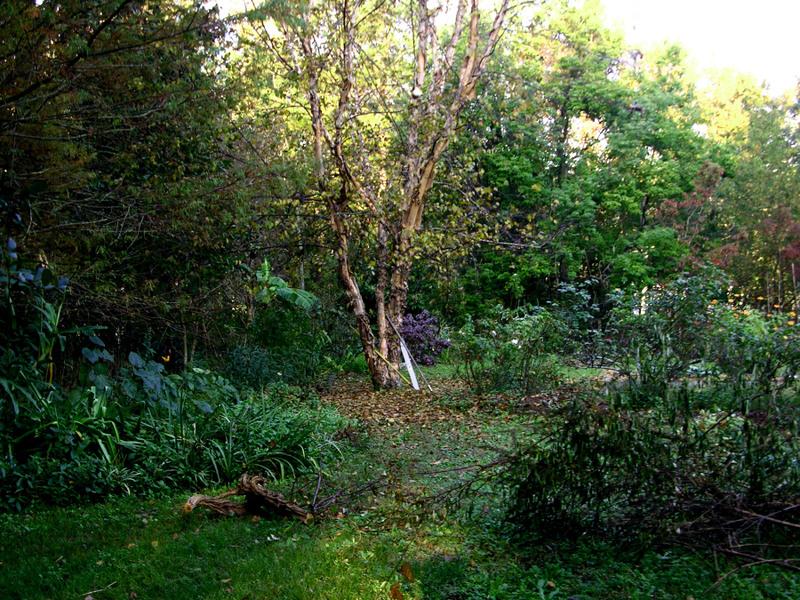 Right Front Garden
