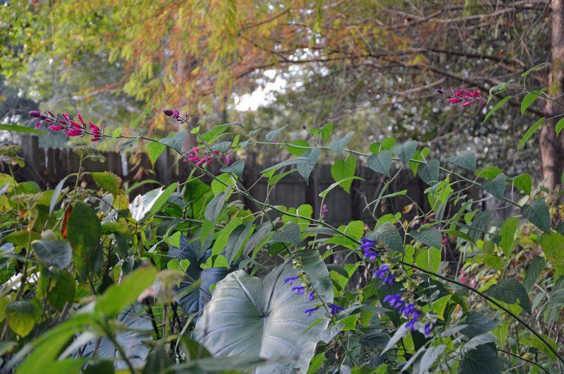 Fall Garden 14 November 2013