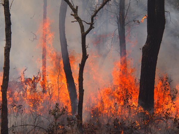 Longleaf sandhill burn