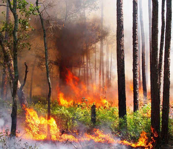 Longeleaf flatwoods burn