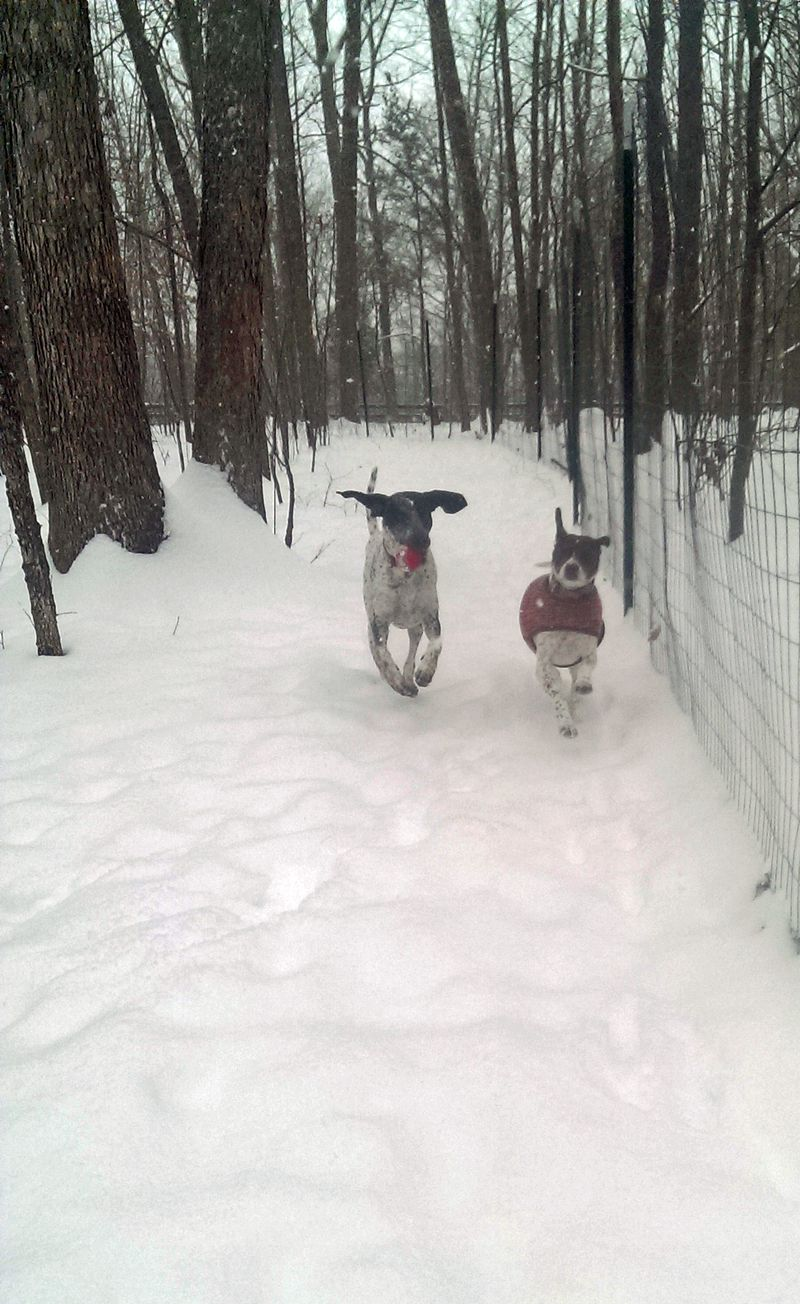 Blue and Dan in the snow 21 February 2015