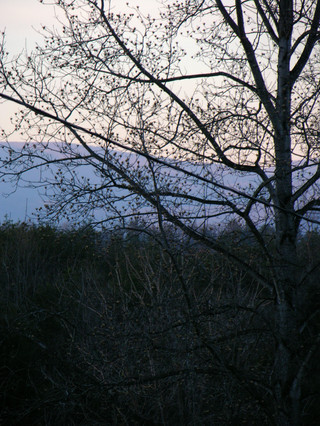 Blue_ridge_through_trees