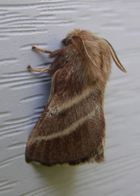Front_door_light_moth_29_april_2007