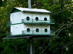 Purple_martin_house_22_april_2007