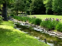 Swan_lake_iris_garden_ii_26_may_2_2