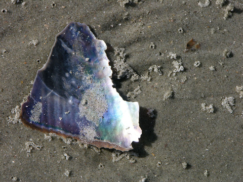 Shell_fragment
