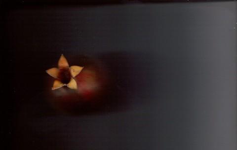 Pomegranate_scan_color_10282007