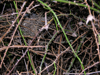 Birds_nest_in_the_silver_moon_10_no