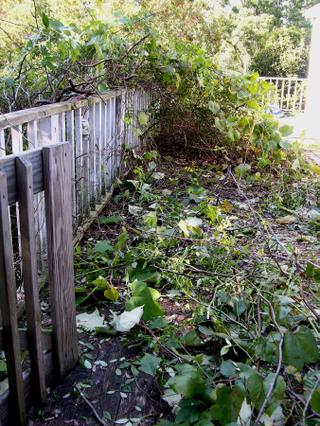 Front_deck_10_november_2007_2