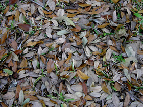 Leaves_29_march_2008