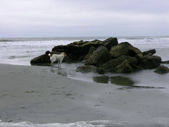 Stannish_at_the_rocks_on_sullivan_2