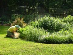 Mom_in_her_garden_10_june_2007