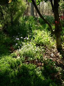 Back_garden_16_april_2008