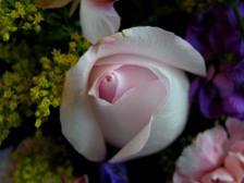 Flower_arrangement_ii_16_april_2008