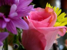 Flower_arrangement_iii_16_april_200