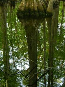Beidler_forest_i