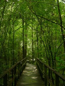 Beidler_forest_ii