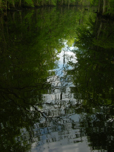 Four_holes_swamp_26_april_2008