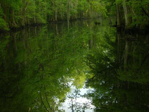 Four_holes_swamp_i_26_april_2008