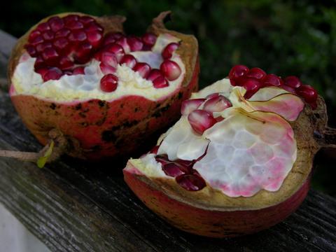 Pomegranate_harvest_9_september_200