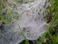 Small_web_on_the_grass_16_october_2