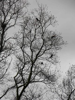 Blackbirds_in_the_popcorn_tree_25_decemb