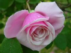 Blossomtime_20_april_2006