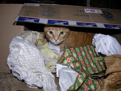 Haiku_at_christmas_26_december_2006_1
