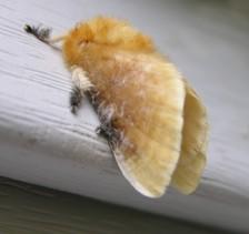 Moth_i_31_july_2006_3