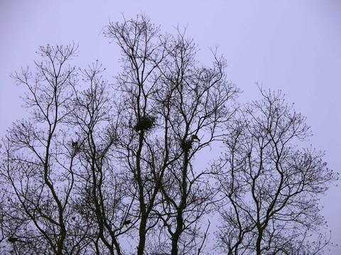 Nests_23_december_2006