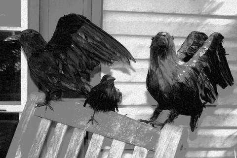 Ravens_ii_21_october_2006